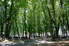 A park in Belgrade