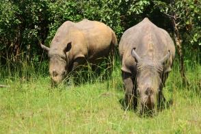 Ziwa Rhino Sanctuary.